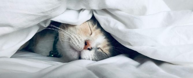 Picture of a cat sleeping under the covers in a bed.