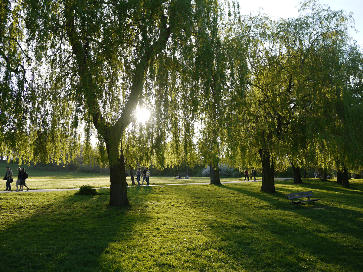 Picture of willows in a park with sun shining through the trees and shadows on the lawn while people walk the path.